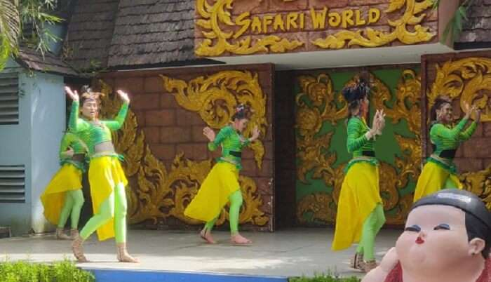 dance performances in safari world
