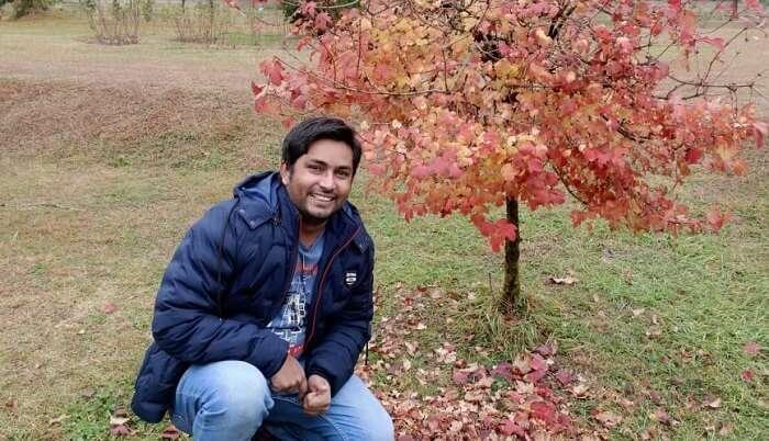 in saffron field