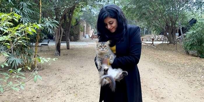 wild cat in lohagarh