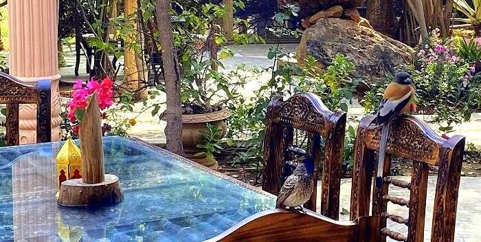 bird watching in the resort