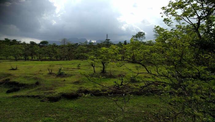 Lush greenery view