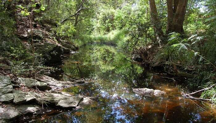 Enoggera Creek catchment