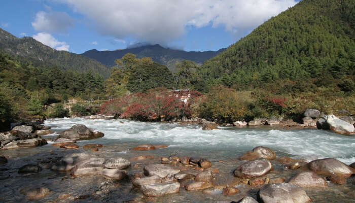 Jigme Dorji National Park