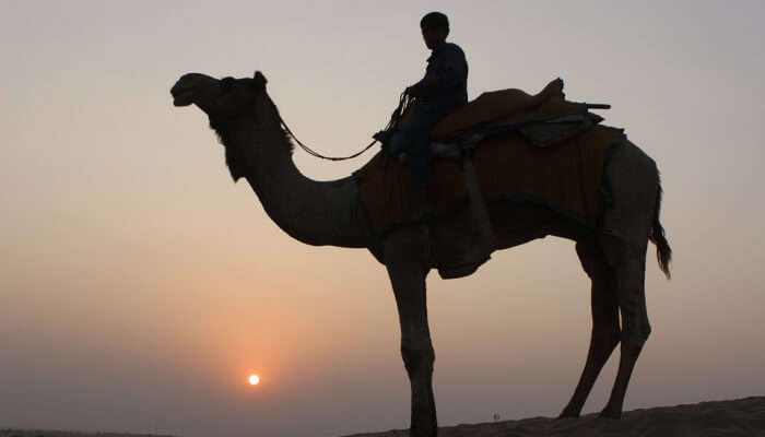 This fun journey on a camel's back