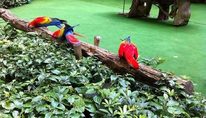 Theme park in Singapore