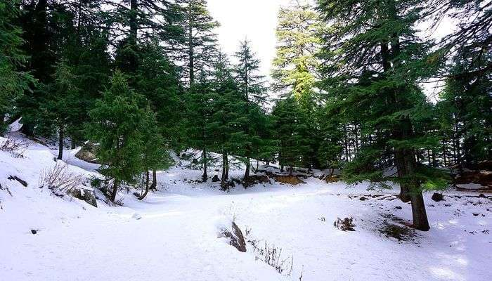 Kalatop Khajjiar Sanctuary