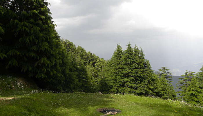 Kalatop Wildlife Sanctuary in Dalhousie