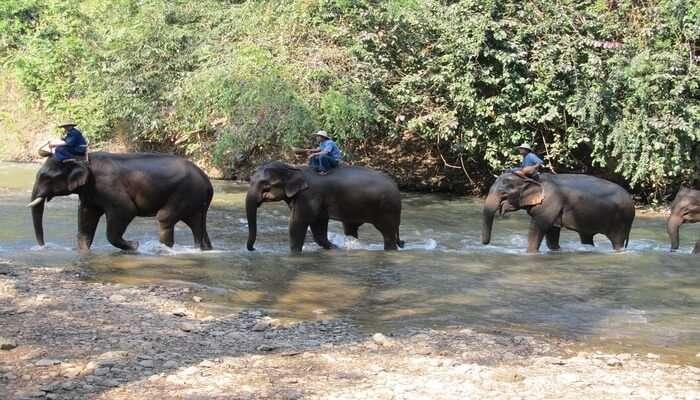 Kalim Elephant Camp