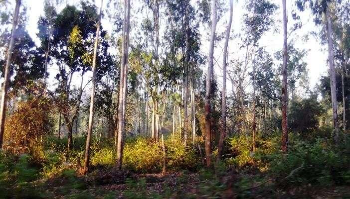 Kalladi Forest trek