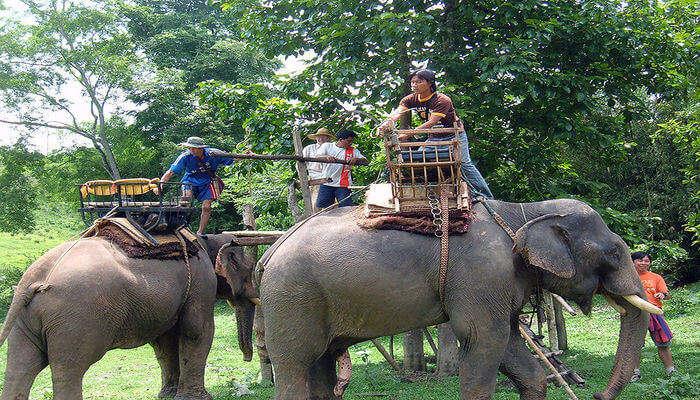 Kinnaree Elephant Trekking