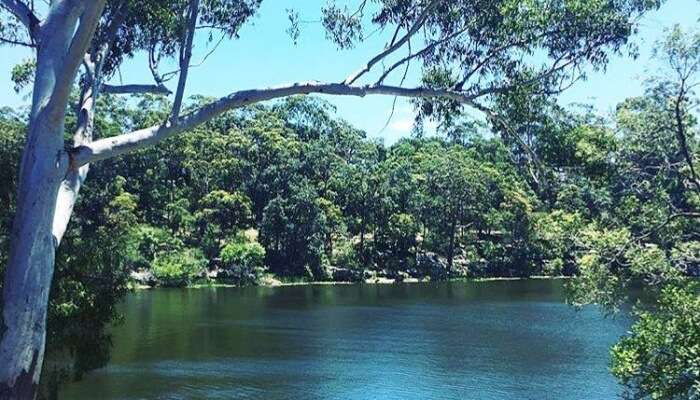 lake and greenery