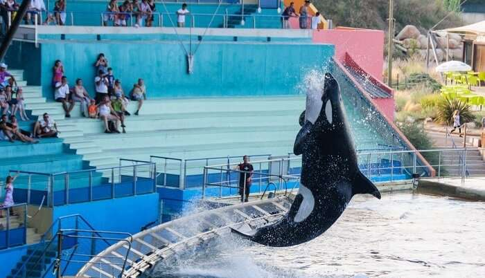 dolphin show in the zoo