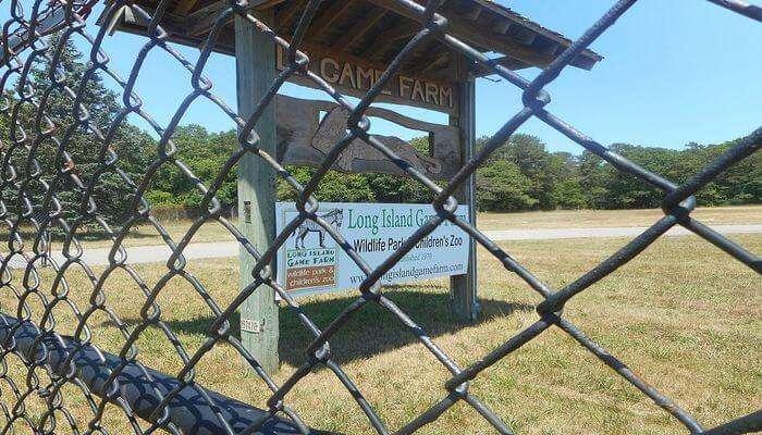 Long Island Game Farm