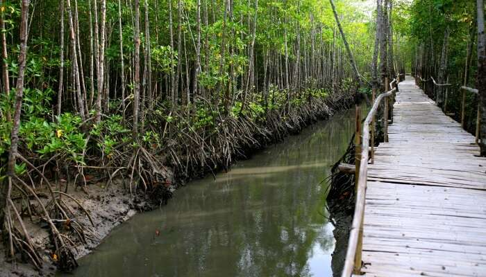 mangrove channels and reaching