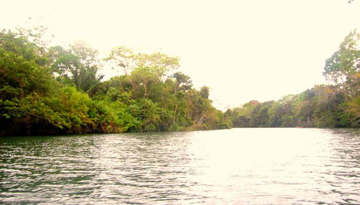 Moho River, Sajan, Maharasthra