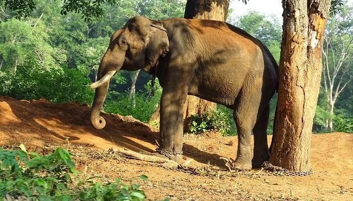 Wildlife sanctuary in Mudumalai