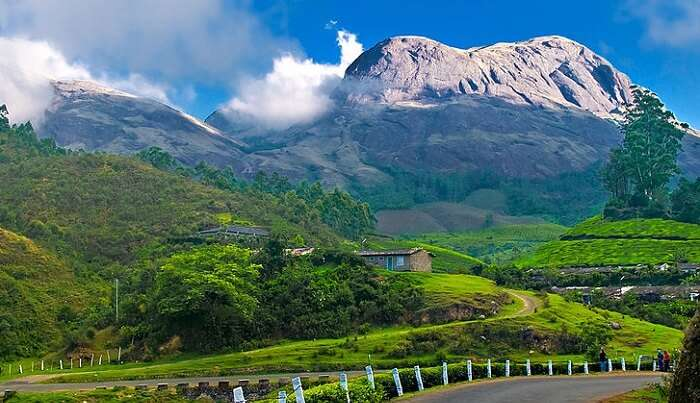 tea-plantations of Kerala