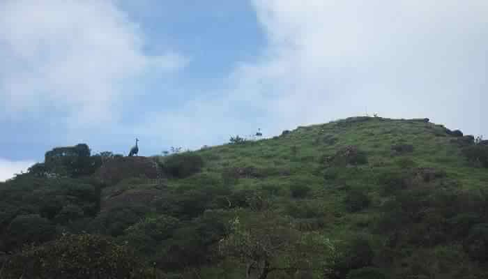 Amazing Murugan Mala