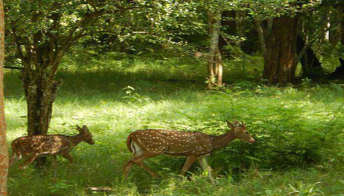 Nagarhole National Park View