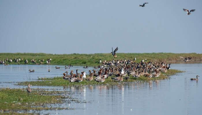 Wildfowl at Nalabana Bird Sanctuary