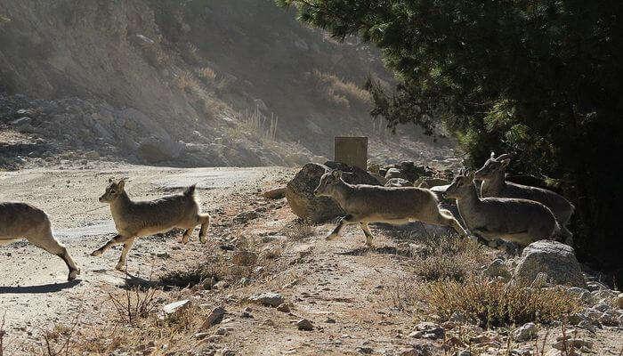 Nargu Wildlife Sanctuary