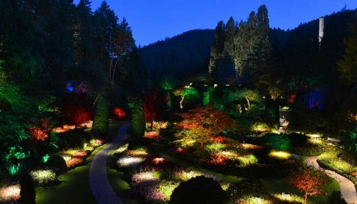 night lights in a garden