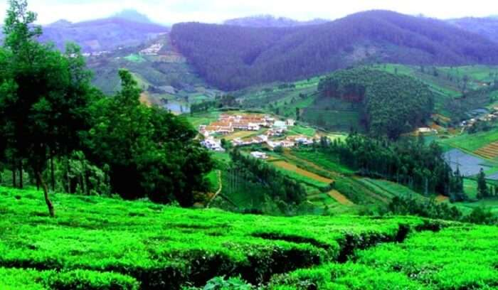 beautiful attraction of Ooty