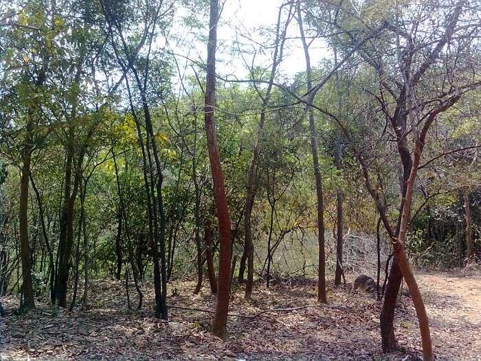 Wildlife sanctuaries in Orccha
