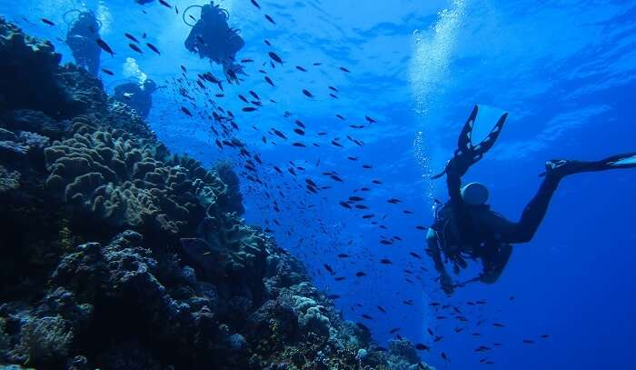experiencing scuba diving in Cairns underwater