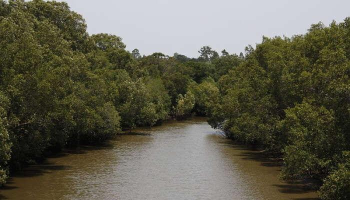 major tributaries