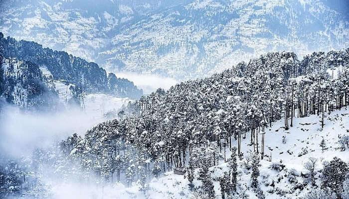 Snowfall View