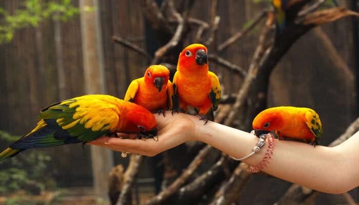 Phuket Bird Park In Phuket