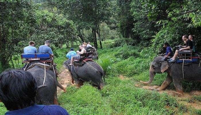 Phuket Elephant Trekking Tours