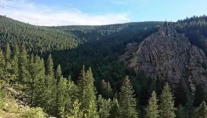 Beautiful Pine Hill