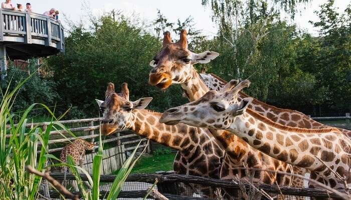 top zoological parks in the world