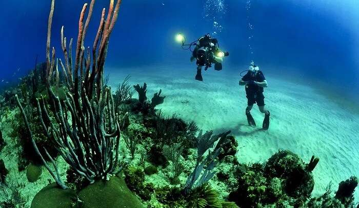 find an adventure with marine life