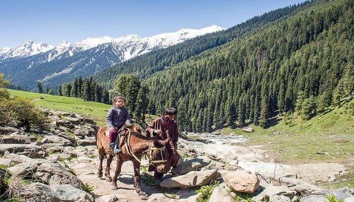 Ride A Pony While You Are In Kashmir
