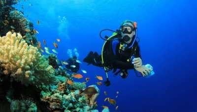 Scuba Diving In Pattaya Cover