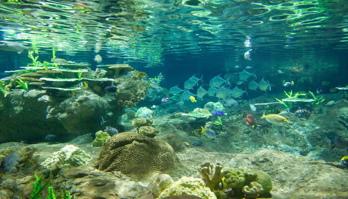 experience scuba diving