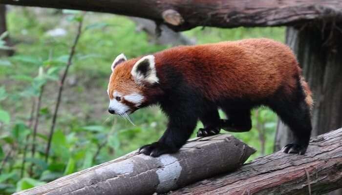 Sikkim Himalayan Zoological Park