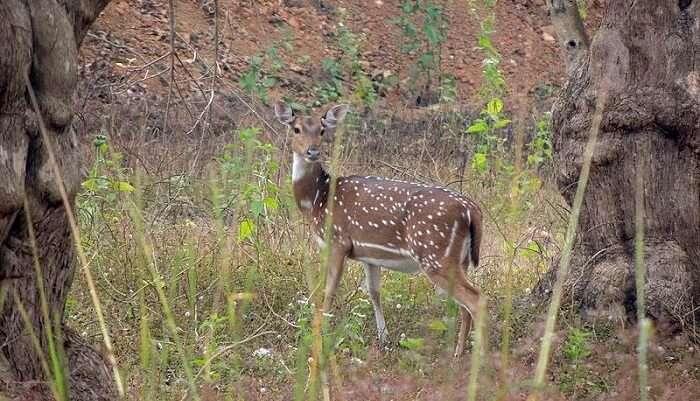Ballavpur Wildlife Sanctuary & Deer Park