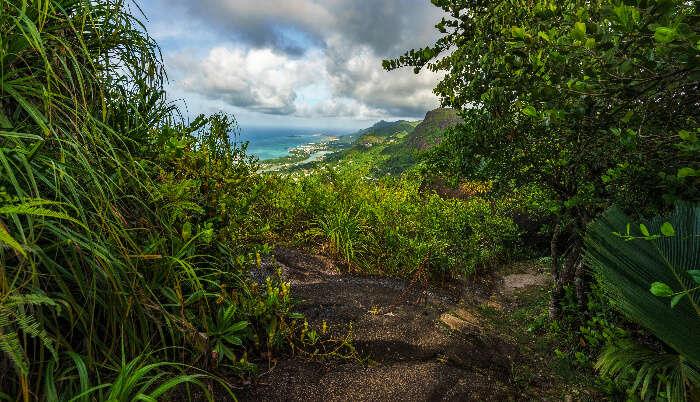 The Copolia Trail in Seychelles