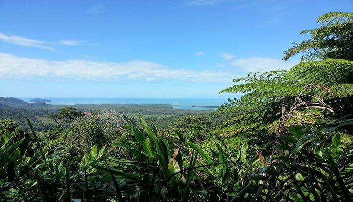 The Daintree National Park