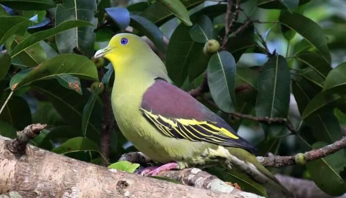 bird in a national park