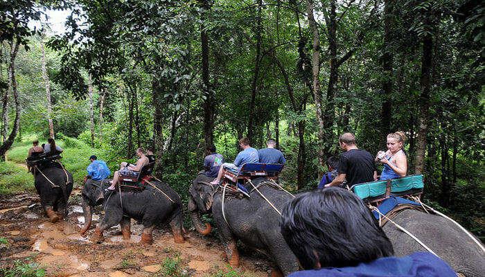 Traveliss Elephant Trekking