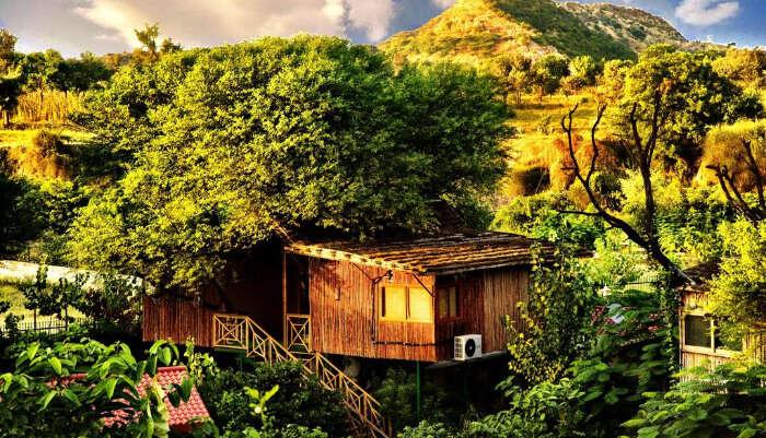 Tree House Resort in Jaipur