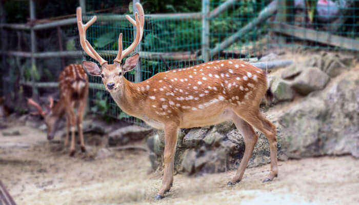 A deer at a zoo