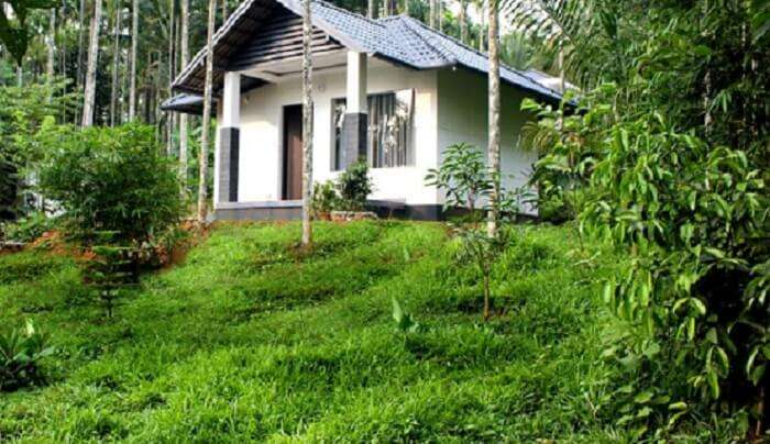 villa surrounded by lush green