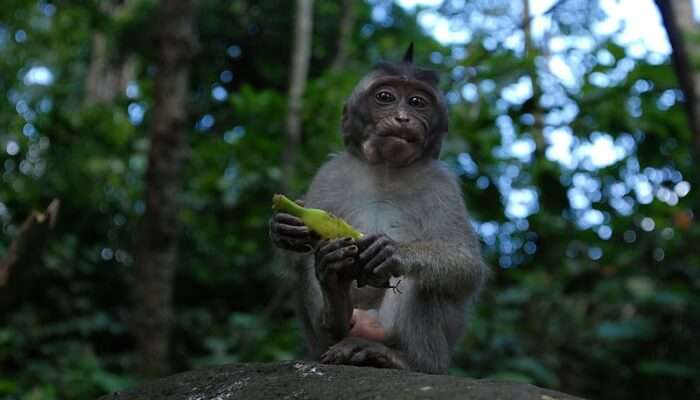 Visit The Monkey Forest