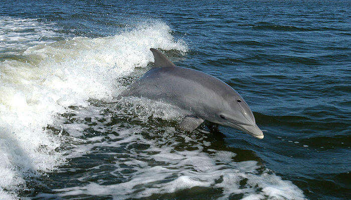 Watch Dolphins At Port Stephens